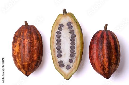 canvas print picture Frische Kakao Früchte mit Bohnen