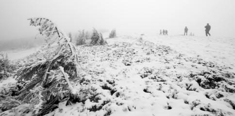 Group of people trekking in foggy winter landscape