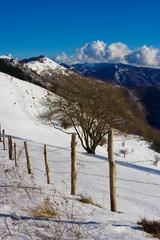 Recinzione in paesaggio invernale