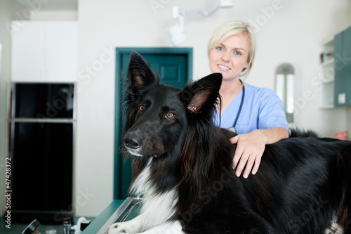 Female Veterinarian Doctor With A Dog At Clinic