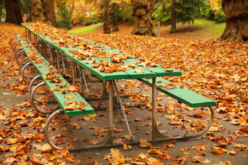 Long autumn picnic table