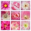 Collage Of Pink Flowers