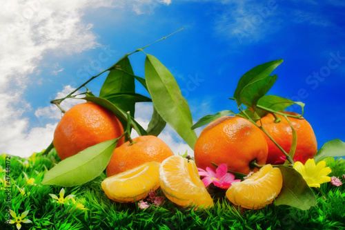 fresh clementines against blue sky