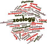 Word cloud for Zoology poster