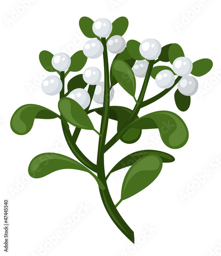 Mistletoe branch. Vector illustration.