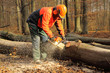 Leinwanddruck Bild - Professionelle Forstarbeiten
