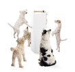 Dogs sitting, jumping, looking at a bone on a pedestal