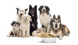 Group of dogs with a bowl full of bones