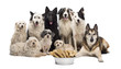 Group of dogs with a bowl full of bones in front of them
