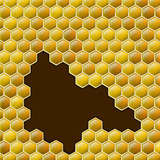 Vector honey combs background