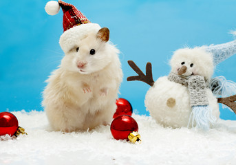 Dwarf hamster with christmas red hat