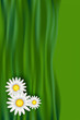 Chamomile (daisy) flowers over abstract green grass waves. Mesh