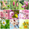 Beautiful spring flowers collage, nine photos