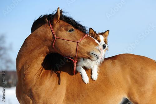 Czerwony koń i pies to przyjaciele