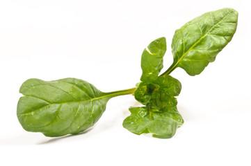 Fogliedi spinacio