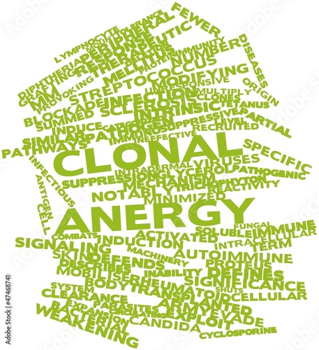Word cloud for Clonal anergy