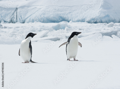 Pair of Adelie penguins on an ice floe.