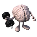 brain organ with arms and legs weight training