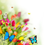 Fototapety  Beautiful spring flowers with butterflies