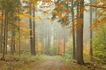 Forest trail in the mountains on a misty October's morning