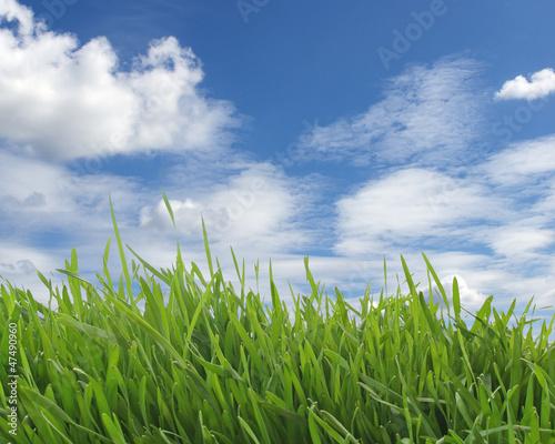 Fototapeten,frisch,grün,gras,himmel