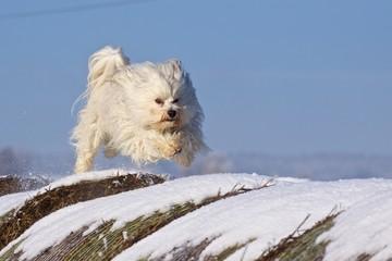 Hundeaction
