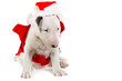 Adorable puppy in Santa costume isolated over white