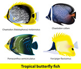 Tropical butterflyfish set.