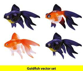 Aquarium Goldfish set. Telescope and Veiltai.