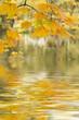 Blätter im Herbst am See mit Spiegelung