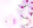 Fototapeten,orchid,foto,blume,natur