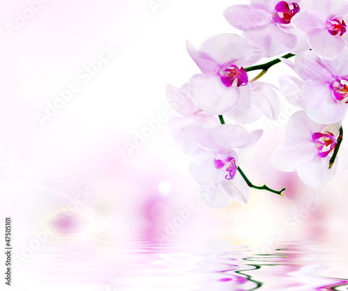 light pink composition with orchids