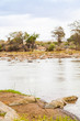 Kenian crocodiles