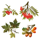 Collection autumn leaves and fruits isolated on white background