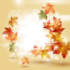 Autumn leaves falling on bright background