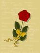 Dankeschön, Karte mit Rose