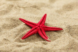Fototapety Close-up of a red starfish on beach sand pattern