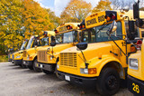 Yellow school buses against autumn trees