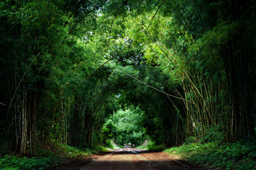 Road with Bamboo
