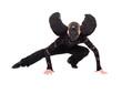 black angel with wings posing
