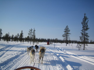 lapland with huskies