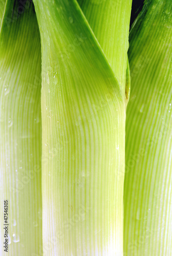 Green leek closeup background
