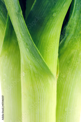 Leek fresh with drops close, macro