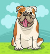 english bulldog dog cartoon illustration