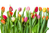 border of spring tulips - 47547387