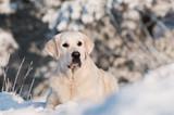 Fototapeta zwierzęta - tło - Zwierzę domowe