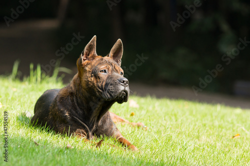 dog lying on green grass