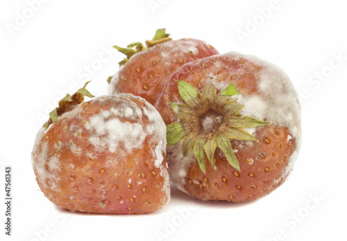 Rotten mouldy strawberries on a white background