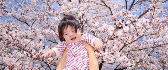 満開の桜の下の笑顔のベビー