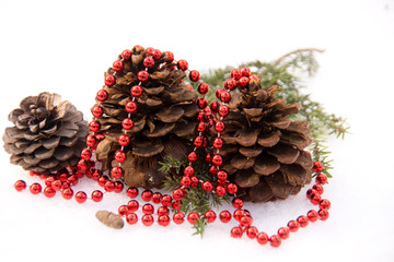 Fir with cones